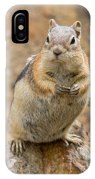 Grumpy Squirrel IPhone Case