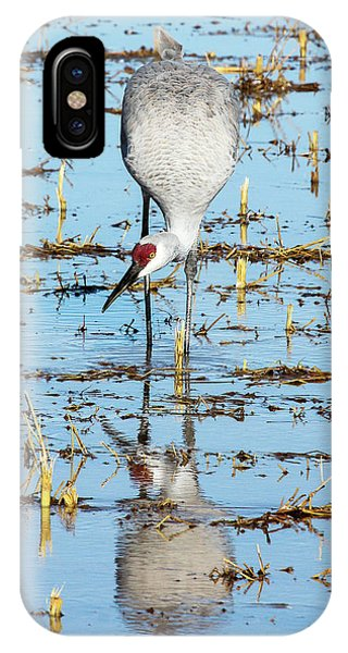 Grus Canadensis I IPhone Case