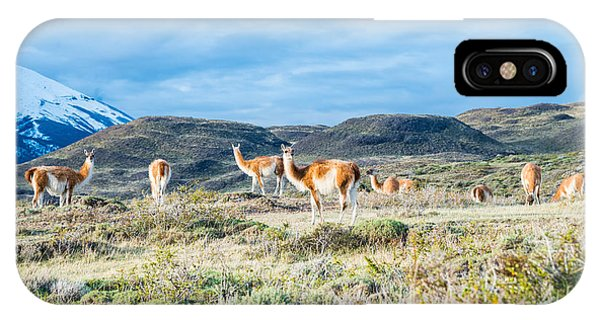 Guanaco In Patagonia IPhone Case