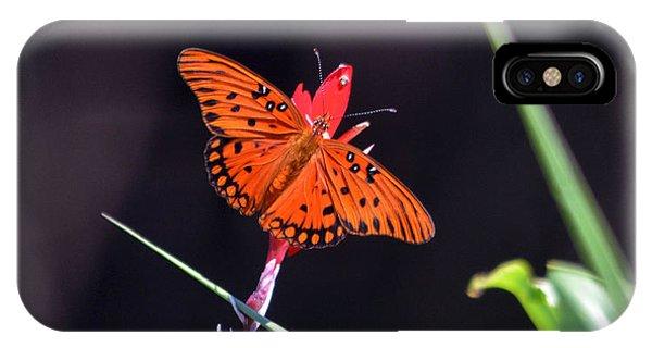 Gulf Fritillary Butterflyl IPhone Case