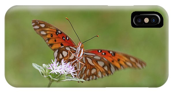 Gulf Fritillary On Elephantsfoot IPhone Case