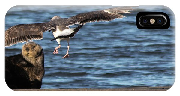 IPhone Case featuring the photograph Gull With Sea Otter Photobomb by Lora Lee Chapman