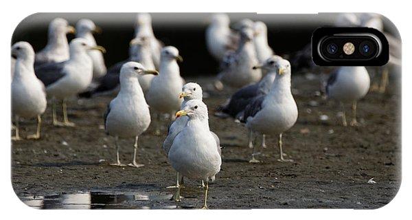 Gulls At The Beach IPhone Case