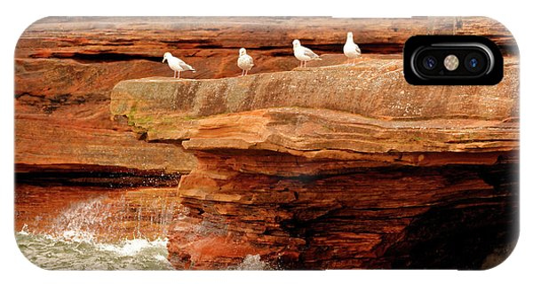 Gulls On Outcropping IPhone Case