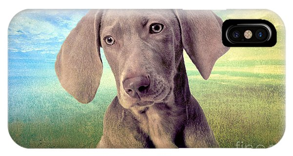 Gunshy Weimaraner Looking For Loving Home IPhone Case