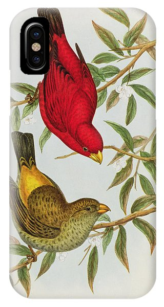 Scarlet iPhone Case - Haematospiza Sipahi by John Gould