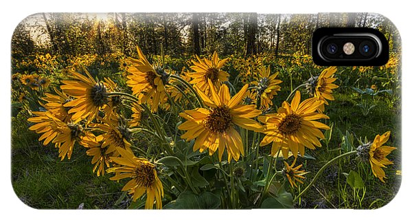 Hamblen Park Sunshine IPhone Case