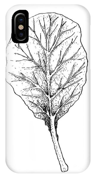 Mustard iPhone Case - Hand Drawn Of Collard Green On White Background by Iam Nee