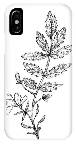 Mustard iPhone Case - Hand Drawn Of Mustard On White Background by Iam Nee