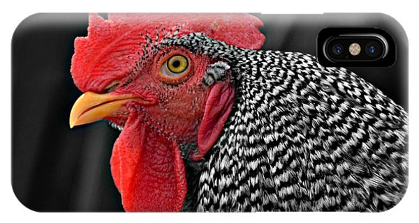 Handsome Plymouth Rock Rooster IPhone Case