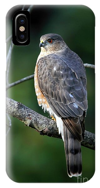 Handsome Sharp Shinned Hawk IPhone Case