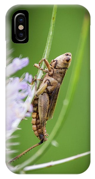 Hanging Out IPhone Case
