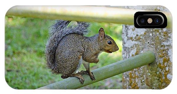 Happy Squirrel IPhone Case