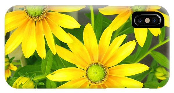 Happy Yellow Summer Cone Flowers In The Garden IPhone Case