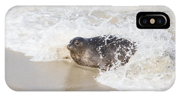 Harbor Seal IPhone Case