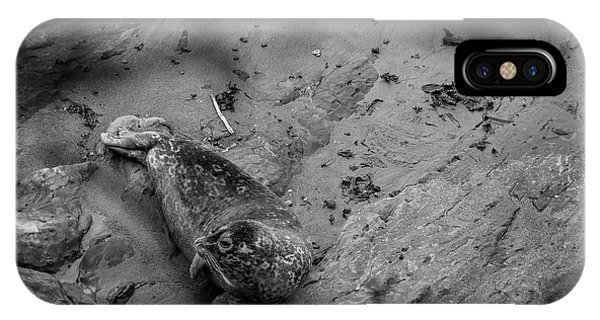 Harbor Seal Pup Monochrome  IPhone Case