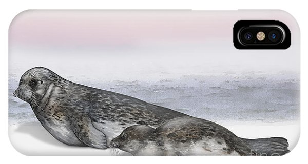 Harbour Seal Common Seal Phoca Vitulina - Marine Mammals - Seehund IPhone Case