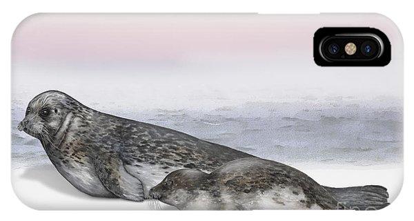 Harbour Seal Common Seal Phoca Vitulina - Marine Mammals - Seehund IPhone Case