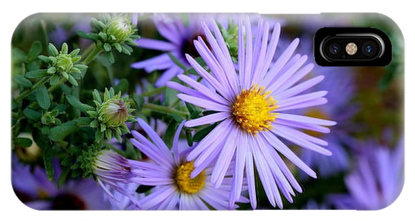 Hardy Blue Aster Flowers IPhone Case