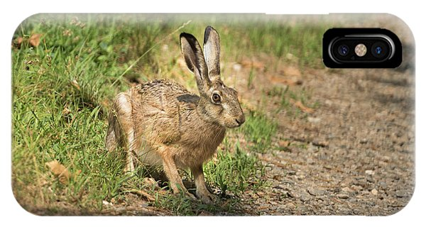 Hare In The Woods IPhone Case