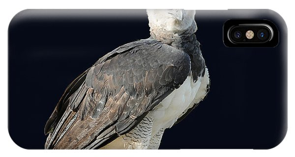 Harpy Eagle IPhone Case