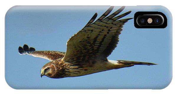 Harrier In Flight IPhone Case