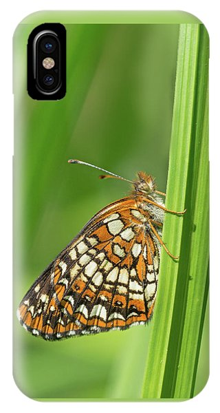 Harris' Checkerspot IPhone Case