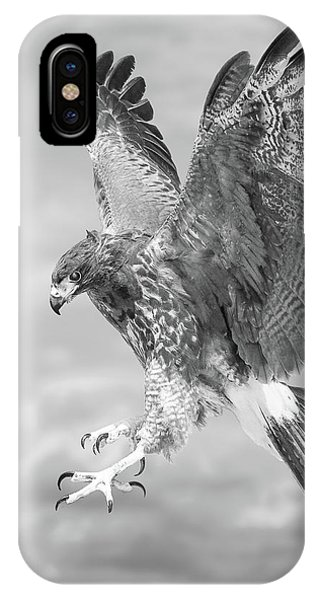 Harris's Hawk IPhone Case