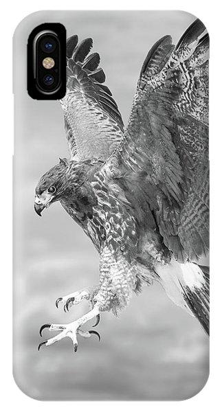 Harris's Hawk IPhone Case