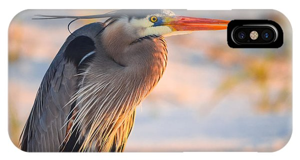 Harry The Heron With Plumage Close-up IPhone Case