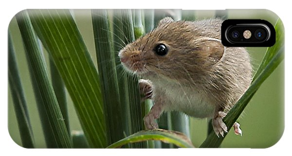 Harvest Mouse Close Up Phone Case by Philip Pound