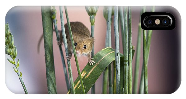 Harvest Mouse In Grass Phone Case by Philip Pound