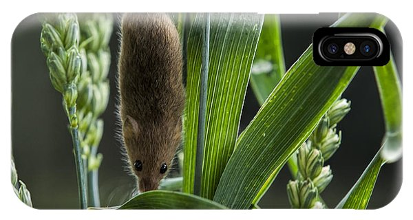 Harvest Mouse In The Grass Phone Case by Philip Pound