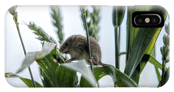 Harvest Mouse On Stalks Of Grass Phone Case by Philip Pound