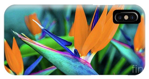 Hawaii Bird Of Paradise Flowers IPhone Case