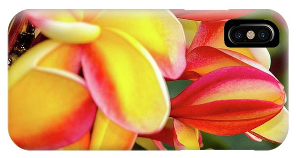 Hawaii Plumeria Flowers In Bloom IPhone Case