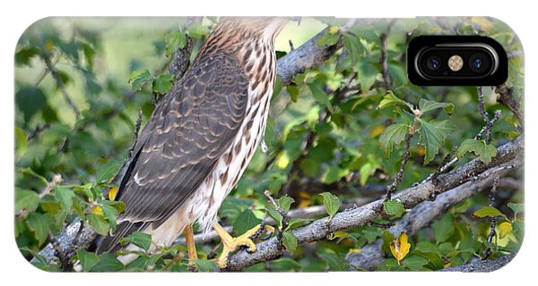 IPhone Case featuring the photograph Hawk  by AJ Schibig