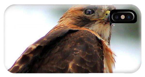 Hawk IPhone Case