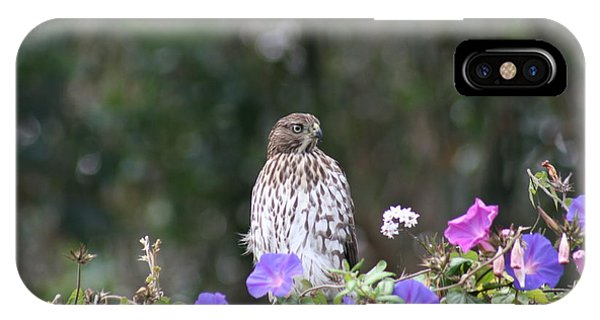 IPhone Case featuring the photograph Hawk by Cynthia Marcopulos