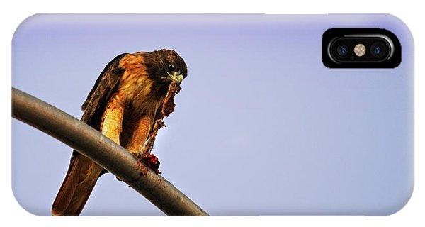 Hawk Eating IPhone Case