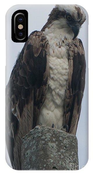 Hawk Facing Down IPhone Case