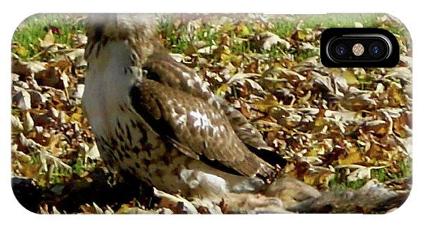 Hawk Falling Leaves IPhone Case