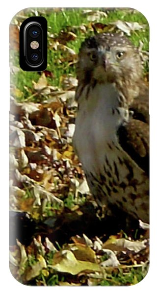 Hawk Falling Leaves IPhone Case