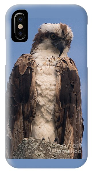 Hawk Glare IPhone Case