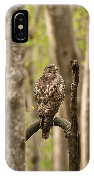 Hawk Hunting In The Woods IPhone Case