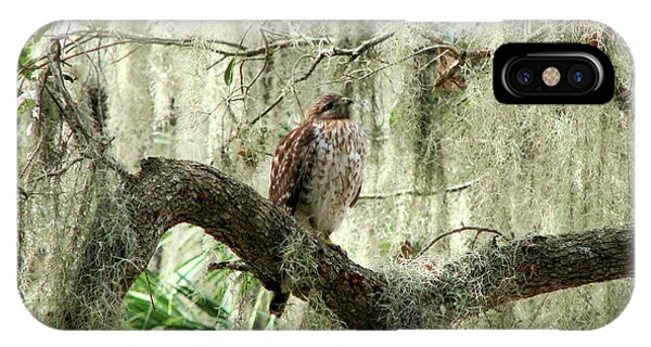 Hawk In Live Oak Hammock IPhone Case