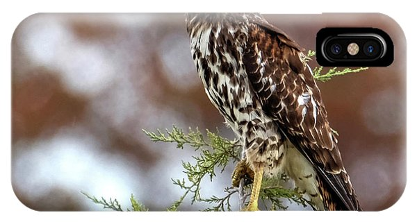 Red Shoulder Hawk Looking At Me IPhone Case