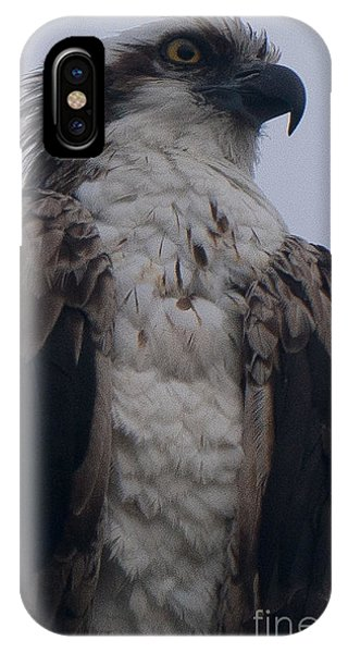 Hawk Looking Into The Distance IPhone Case