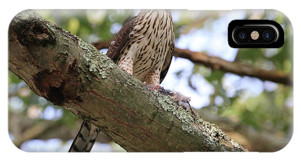 Hawk On A Branch IPhone Case