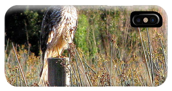 Hawk On Post IPhone Case